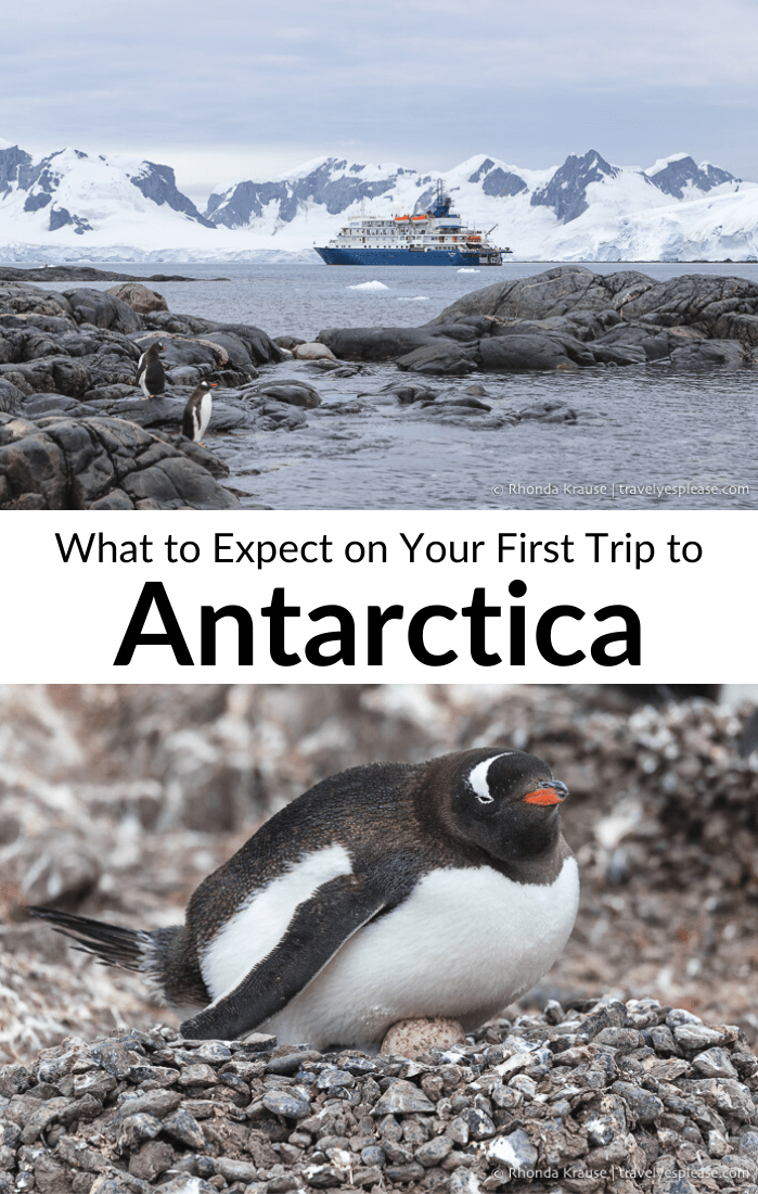 What to Expect on Your First Trip to Antarctica- A First Time Visitor\'s Guide