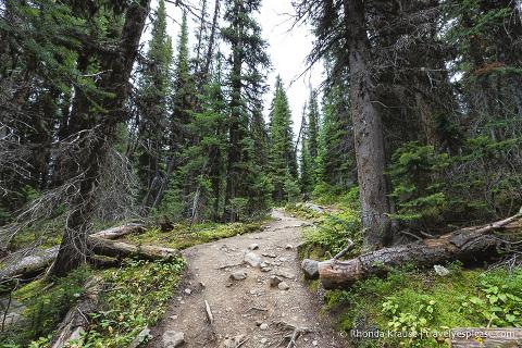 Cavell Meadows Hike Guide- Jasper National Park