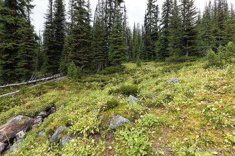 Hiking Cavell Meadows Trail- Jasper National Park