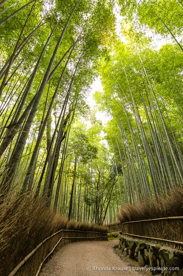 Beautiful Places in Japan to Visit