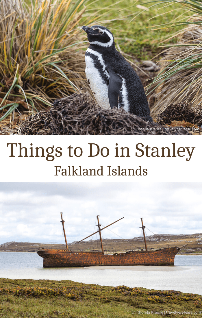 Things to Do in Stanley- How to Spend One Day in the Capital of the Falkland Islands