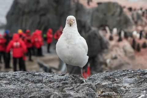 Seabird in Antarctica