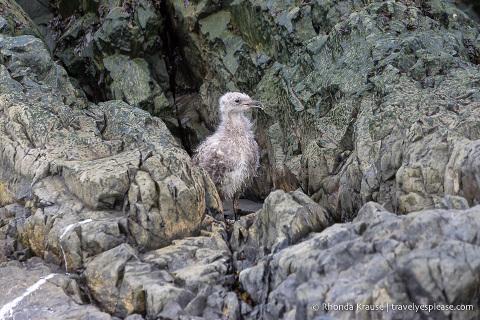 Bird chick Antarctica