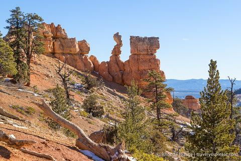 Rocks and trees on Fairyland Trail