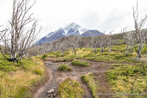 Grey Glacier Trail in Torres del Paine National Park