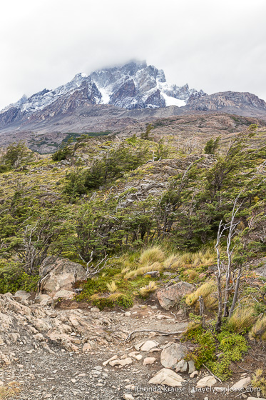 Mountain and windswept trees on the hike to Grey Glacier