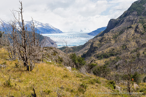 View of Grey Glacier from the hiking trail