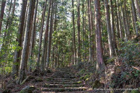 Forested hiking trail on the Kumano Kodo pilgrimage route