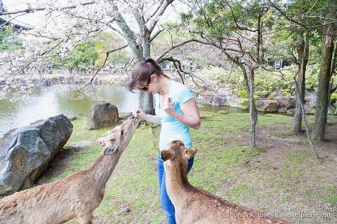 Feeding two deer in Nara Park