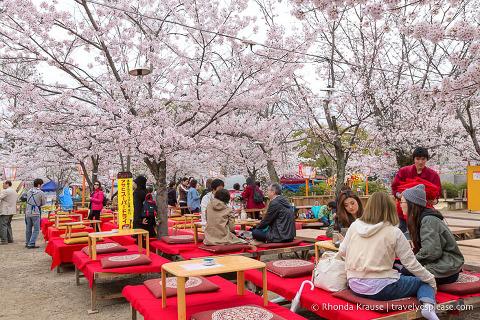 Hanami party at Maruyama Park, Kyoto