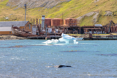 Old ships and equipment at the abandoned Grytviken whaling station.