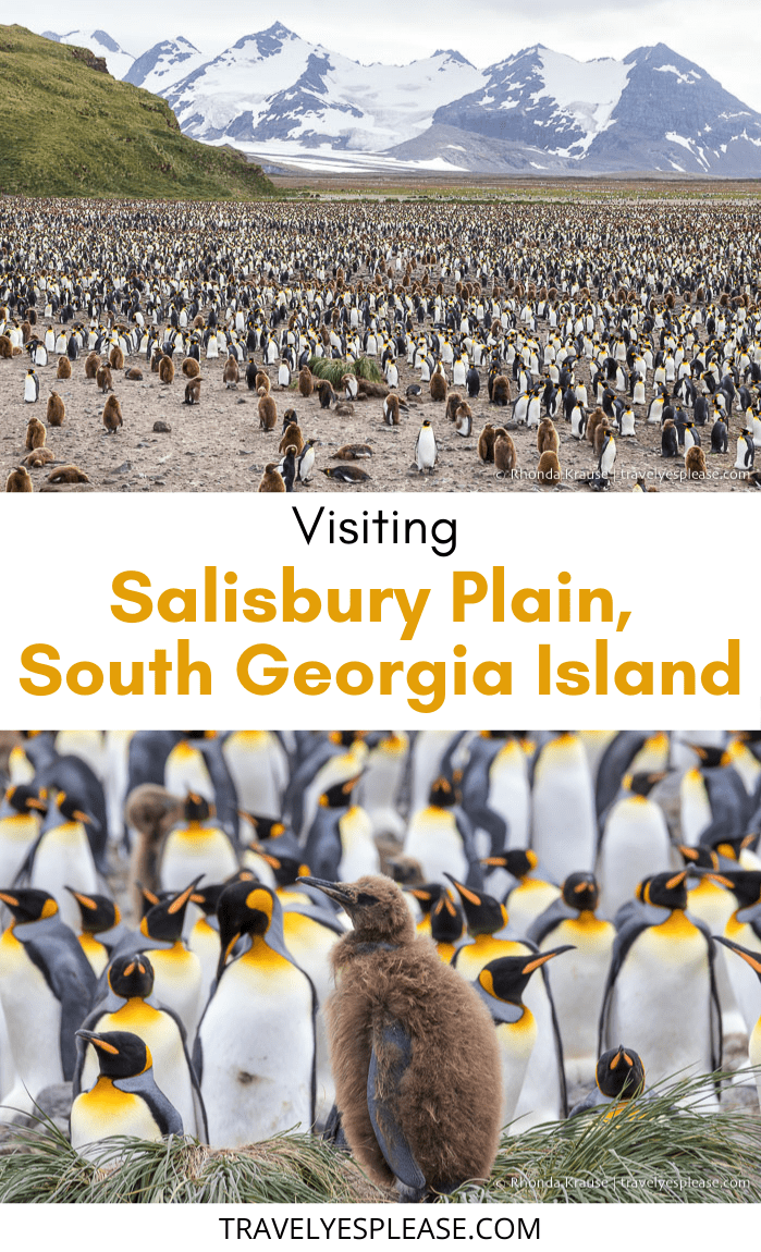 Salisbury Plain, South Georgia- Visiting One of the Island\'s Largest King Penguin Colonies