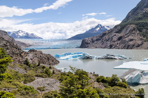 Grey Glacier with icebergs floating in front of it.