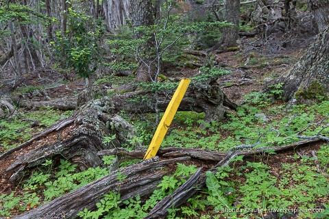 Yellow stake marking the trail.
