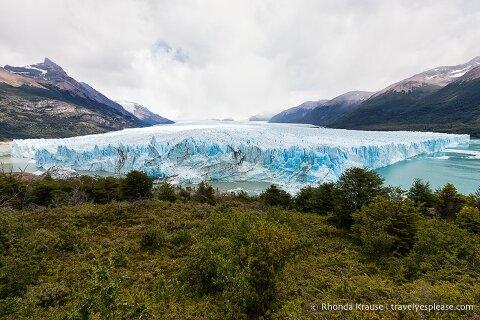 Looking over the treetops at a sprawling view of Perito Moreno Glacier.