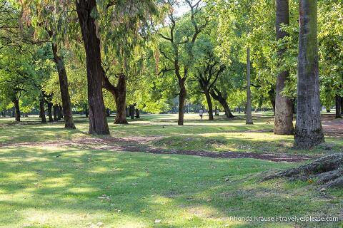 Green space in Plaza Sicilia.